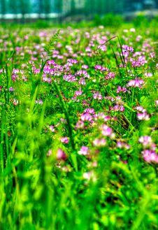 Free Flower Royalty Free Stock Photo - 13789385