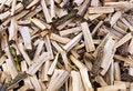 Free Firewoods Royalty Free Stock Photo - 13796865
