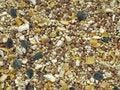 Free Bird Seed Stock Photo - 13799060