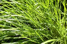 Free Bright Green Grass Stock Photography - 13795402
