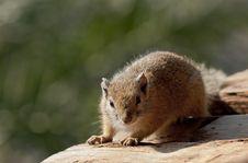 Free Basking Squirrel Stock Photos - 13796673