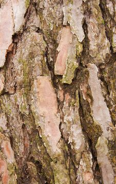 Free Bark Royalty Free Stock Photos - 13796978