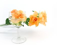 Free Buds Of Roses In A Wineglass Royalty Free Stock Photos - 13797028