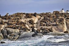 Free Seal Habitat Stock Photography - 13797302