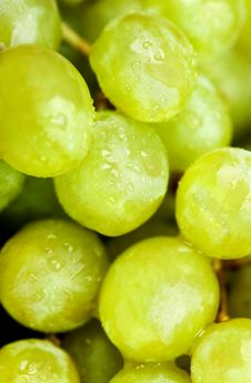 Free Ripe Green Grapes Stock Photos - 13797303