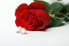 Free Ring With Pearl And Red Rose Royalty Free Stock Photos - 13797778