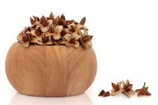 Free Beech Nuts Stock Photography - 13799412
