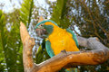 Free Tree Parrot Stock Photography - 1382512
