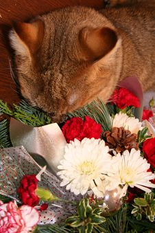 Free Flower Cat Royalty Free Stock Photography - 1380327