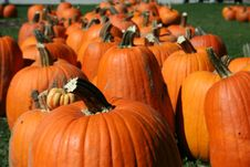 Free Pumpkin In Patch Stock Images - 1381174
