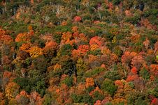 Free Fall In The Hudson Valley Stock Image - 1381291
