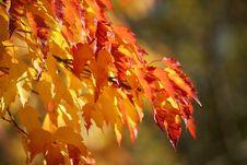 Free Autumn Colors Stock Image - 1381531