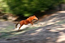 Free Horse Stock Photo - 1381800