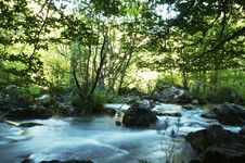 Free Forest River Stock Photo - 1382280