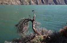 Free Tree On The Mountain Lake Royalty Free Stock Photos - 1382458
