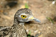 Free Yellow Eye Bird Stock Photo - 1382530
