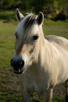 Free Horse At The Grassland Stock Photography - 1382952