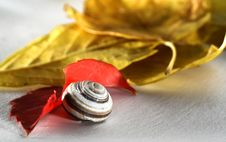 Free Shell And Leaves 2 Stock Images - 1383044
