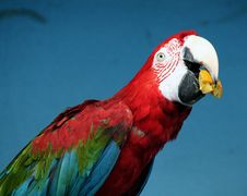 Free Moscow Zoo 69 Stock Photography - 1384002