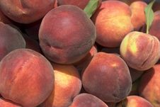 Free Fresh Picked Peaches Royalty Free Stock Image - 1384046