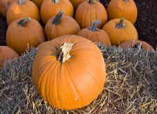 Free Fall Pumpkins Royalty Free Stock Photo - 1384255