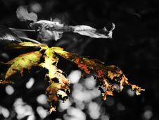 Free Autumnal Royalty Free Stock Photography - 1384827