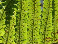 Fern Background Stock Image