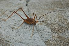 Free Cave Weta Royalty Free Stock Photography - 1386337