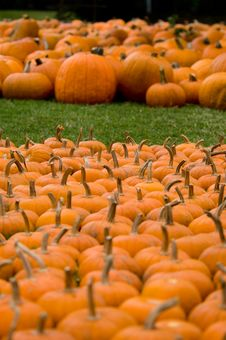 Free Autumn Decoration - Pumpkin Patch Royalty Free Stock Photo - 1386395
