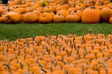 Free Autumn Decoration - Pumpkin Patch Stock Photos - 1386423