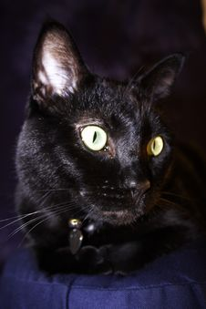 Free Black Cat Royalty Free Stock Image - 1386686