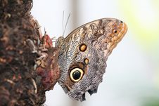 Free Eye On Butterfly Stock Images - 1388194