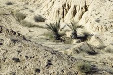 Desert With Two - Ananas Like Palms Stock Photography