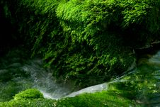 Moss And Stream Royalty Free Stock Image