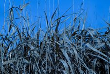 Free Blue Dry Grass Stock Photography - 1389772