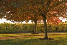 Free Autumn Scenic Stock Image - 1389991