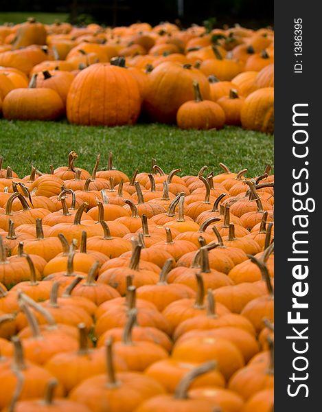 Autumn Decoration - Pumpkin Patch