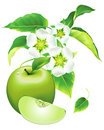 Free Apple Flowering Royalty Free Stock Photography - 13808657