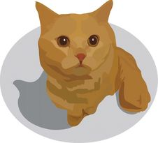 Red Cat With Brown Eyes Stock Photo