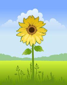 Free Sunflower Stock Photo - 13801790