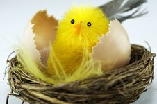 Free New Born Chick In A Nest Royalty Free Stock Photography - 13802947