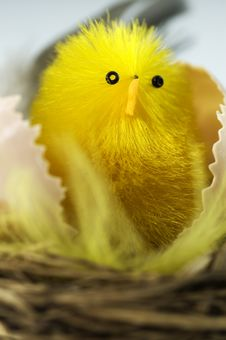 Free New Born Chick In A Nest Stock Photography - 13802972
