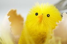 Free New Born Chick In A Nest Royalty Free Stock Photo - 13802995
