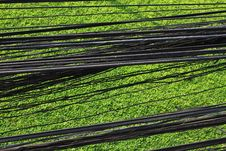 Free Cable Field01 Stock Images - 13803314
