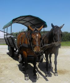 Free Horse-drawn Carriage. Royalty Free Stock Photography - 13803507