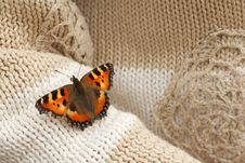 Free Butterfly Seat At Hand Made Sweater On Sleeve Stock Photo - 13803550