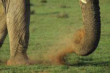 Free Elephant Dust Royalty Free Stock Images - 13803649