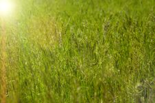 Free Green Meadow Royalty Free Stock Images - 13803739
