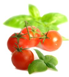 Free Tomatoes And Basil Stock Photography - 13804052
