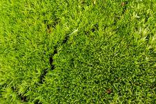 Free Moss Stock Photo - 13804740